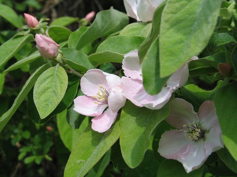 planten snoeien voorjaar